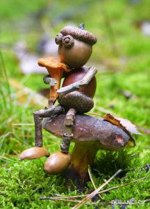 houby-zase-rostou