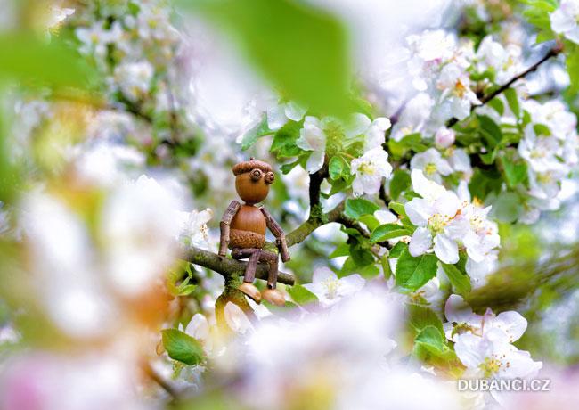 Dubánek mezi květy