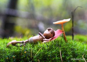 na-mechu-pod-houbou