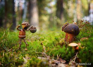 Pohlednice pro nadšené houbaře