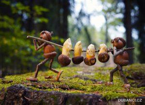 Velká výprava na houby – dubánčí pohled