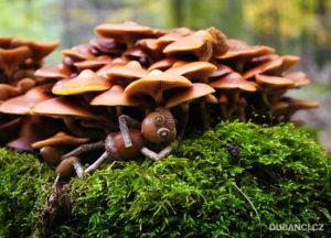 pod-houbama