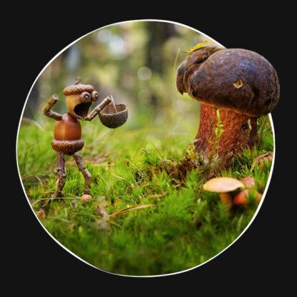 Motiv dubánka houbaře